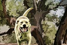 Dog Park / Digitally enhanced dog parks