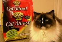 Cat Litter Box Essentials