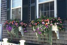 Cedar Shingle Houses