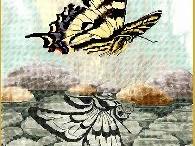 Cross stitch butterflies, dragonflies and other bugs