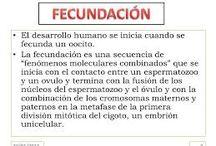 FECUNDACION / EXPLICAR LA  FECUNDACIÓN DEL EMBARAZO