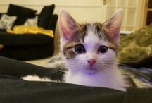 lumiere the cat