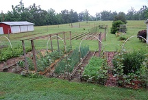 Country Gardening / by Kim Elmore