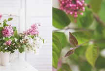 Floral mania - my flower photos