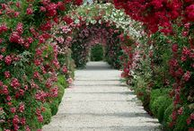 flower gardens / by Kazumi Iitaka