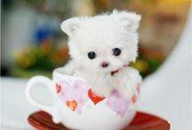 Cute / CUTE!!!!!