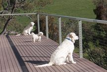 Elm Cottage Furbabys / Pet friendly and situated in the foothills of the Snowy Mountains, our furbabys can run, swim, chase the birds and do what dogs love to do explore..  #petfriendly #petsholiday