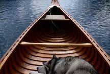 Husky, the Wonder Dog