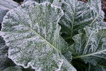 Winter Garden / by Susan Sebotnick