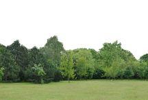 pozadí a trávy