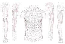 Anatomy (drawing)