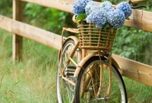 bicycle, la bicicletta / vehicle composed of two wheels, love in waiting.
