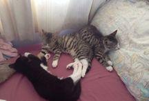 My kitty's