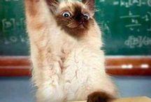 cute cate funny