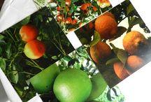Para el hogar / Productos con fotografías impresas en diversos materiales: individuales, portavasos, bandejas,mug's, mousepad