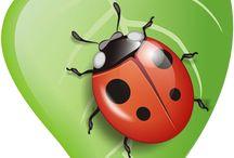 День именниника, Леша Долматов, насекомые