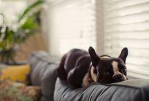 Puppies / by Elizabeth White