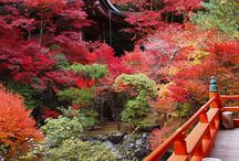 Japan: Gardens and Places / Beauty and wonders of japan / by Autumn Shackelford