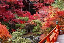 Paisagens japonesas