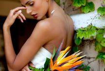 Birds, feathers