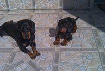 I ❤ my dogs