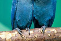 BIRDS / by Holli Huling