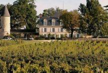 Château Guiraud / visite du vignoble et des chais au Château Guiraud à Bordeaux Réservez avec winetourbooking.com