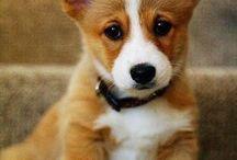 sooooo cute :)