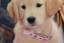Puppy love <3 / by Molly Davoli