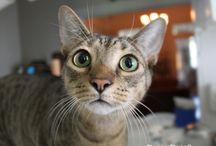 Meow & Purr / Kitties!