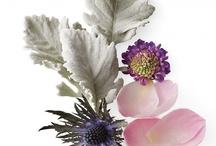 Bloom / by Lori Grannis