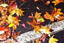 Seasons / winter, spring, summer, fall