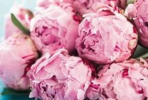 BLOOMS / Simple inspiration- / by Elene Garay