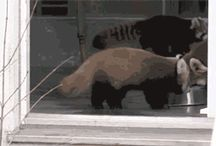 HA-HA(Cats in base)