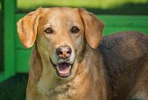 Adoptable Pets on Woof Rescue App