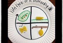 Life cycle charts