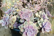 Plants for the old pueblo