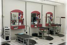 Salon toilettage