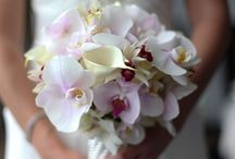 Orchid Bridal Bouquet / #orchid #weddingorchid #orchidflower #orchidbridalwedding #bouquetorchidee #orchidweddingstyle #orchidmariee #orchidee #bridalbouquet #weddingflowers #weddingbouquet #bridalflower#paris #pariswedding #weddingparis #dlgpariswedding #dlgparis #weddingplannerparis #elopementparis#destinationwedding #destinationweddingparis #mariageaparis #organisatricemariage #agenceorganisationmariageparis #love #france #eventplannerparis #weddingday #theknot #flyawaybride #luxwed #travelabroad
