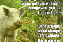 Animal Liberation / Stop Animal Cruelty