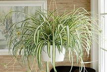 House plants and how not to kill them cause I love them!!!! / House plants and instructions