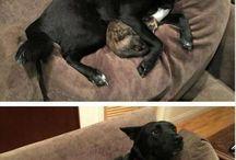 Immagini divertenti di animali