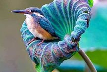 KingFishers Birds / Birds