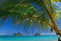 My Hawai'i / by Shawna Noelani Pias
