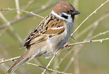 Przyroda_ptaki