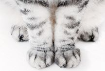 Cats, Inspired By Cats / For your local cat lovers.