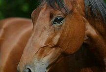 zdjęcia koni