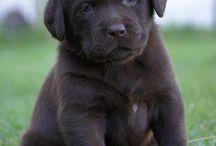 Leahs puppies