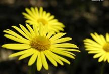 Flowers / by Dawn Jarman