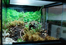 Vivariums and Terrariums / Vivariums, Terrariums, and cages to inspire your own builds!